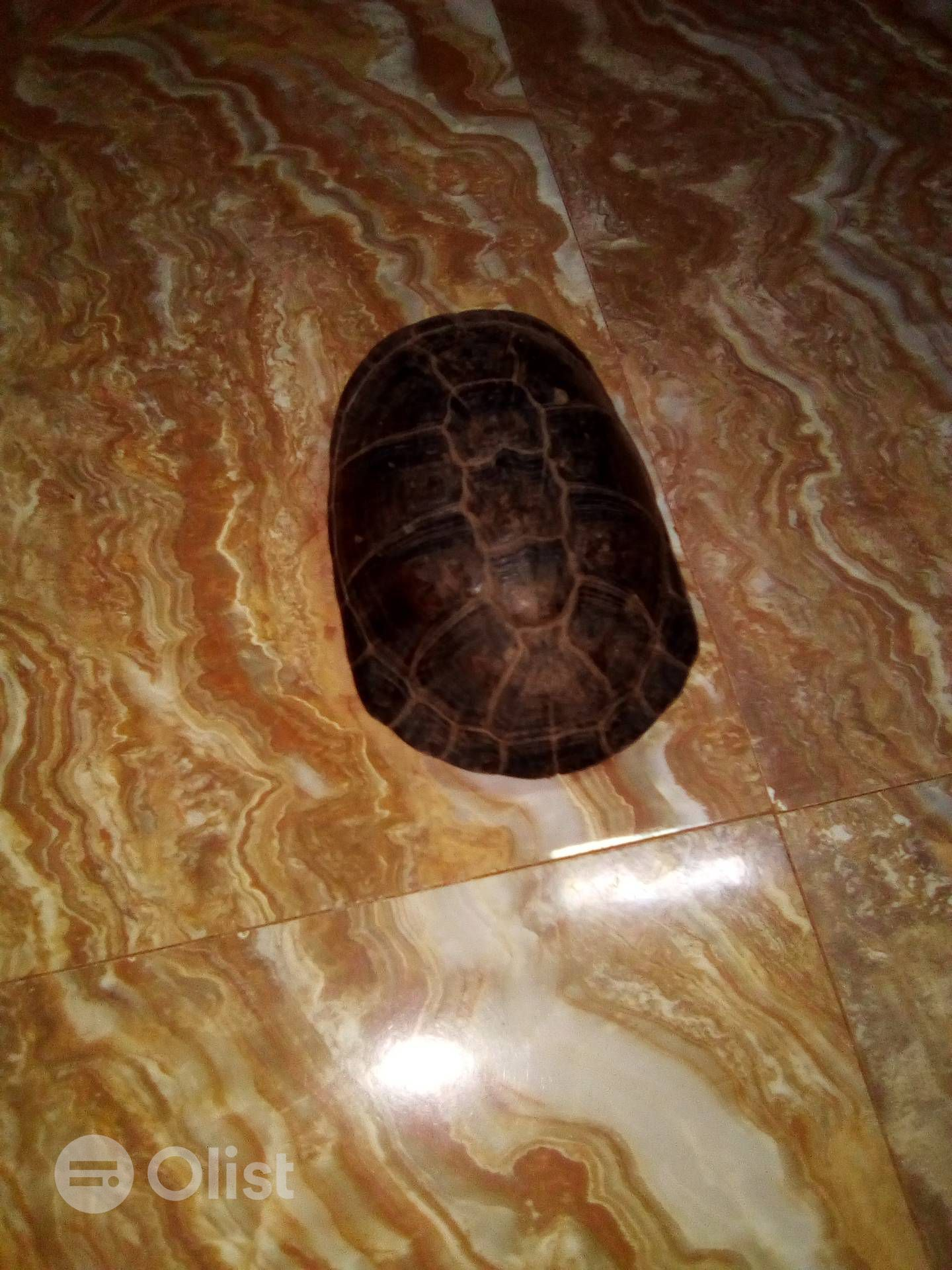 Tortoise up for grabs