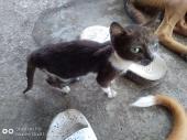 Baby Cat Live and Best Species
