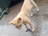 Friendly and active Cat