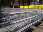 Premium Poultry Cage