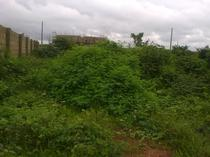 20 Hectares of Land for Sale with R of O