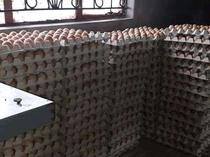 Buy your fresh jumbo size eggs at a discount rate