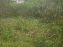 ONE PLOT OF LAND FOR SALE AT OYIGBO, RIVERS, PORT HARCOURT