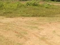 Massive Land for Sale at Peace Garden Estate, Ishefun Ayobo, Ipaja