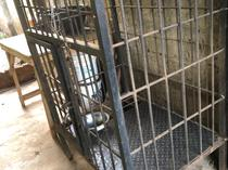 Reinforced Steel 12mmthick Dog cage